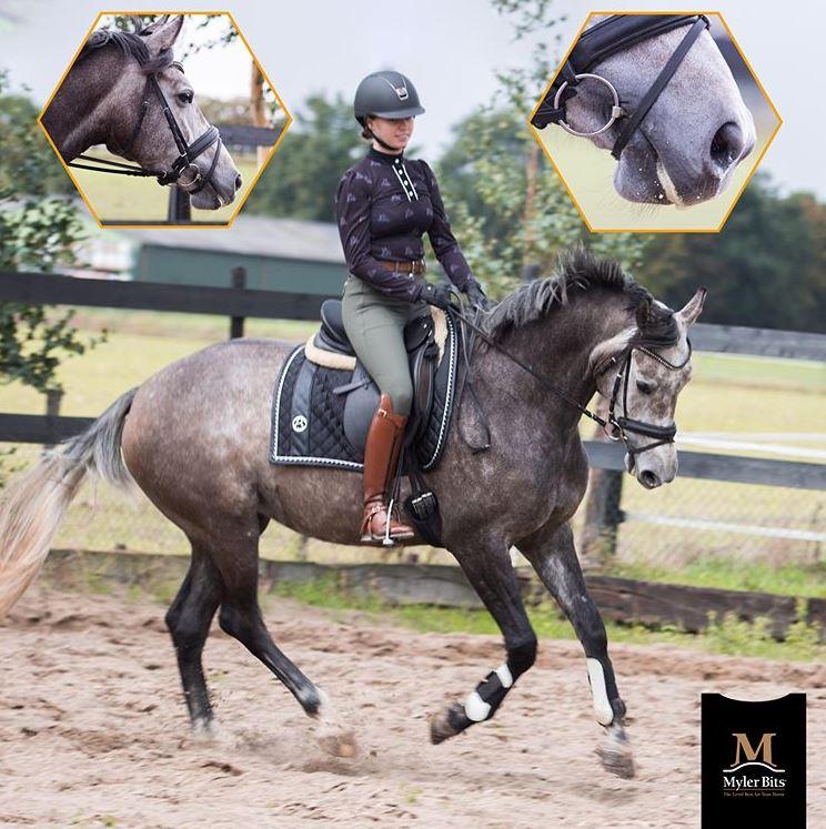 Ruitersport Webshop   Het beste voor Paard & Ruiter ♥
