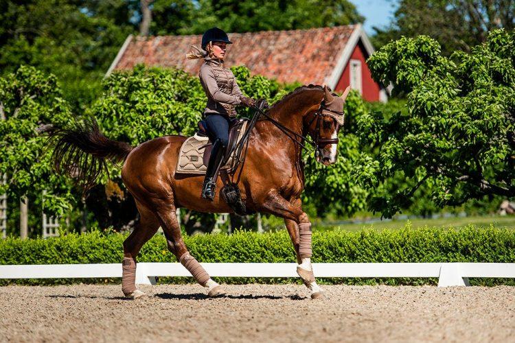 Stok hobby paard Stokpaard zelf