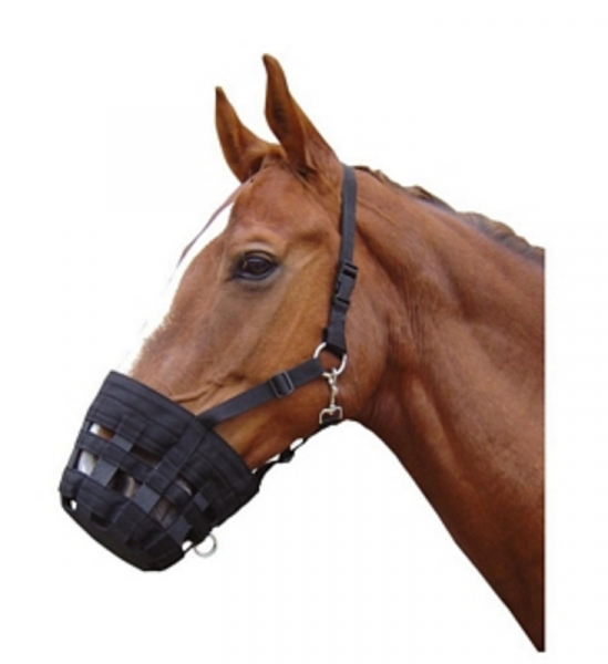 Harry's Horse Grazing muzzle