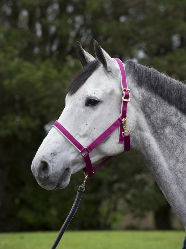 Bucas Dublin veulen halster roze/zilver