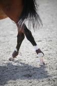 Kentucky Young Horse Kogelbeschermers