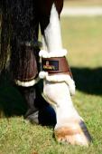 Kentucky Kogelbeschermer Young Horse l