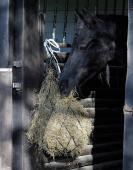 Harry's Horse Hooinet standaard