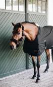 Kentucky Horse BIB Zomer
