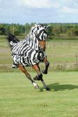 Bucas Buzz-Off Fly Mask Zebra