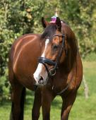 QHP Verjaardagshoedje Paard