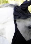 Covalliero Vliegenmasker zonder oren